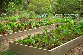 Backyard Vegetable Garden Ideas 24 Fantastic Backyard Vegetable Garden Ideas