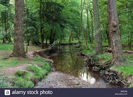 new forest rhinefield ornamental drive hshire stock photo