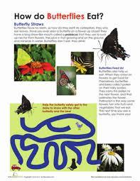 how do butterflies eat worksheet education com