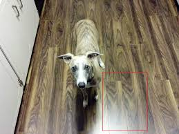 Dogs On Laminate Floors I Put New Flooring In My House And Now They Accidentally Match My