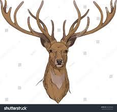 Deer Head by Closeup View Deer Head Horns Brown Stock Vector 344690003