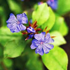 install the most beautiful blue flowers in the garden interior
