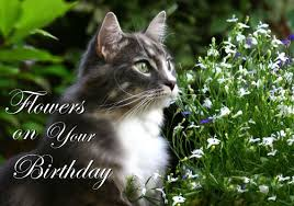 cat by flowers happy birthday greeting card 178 moggies and more