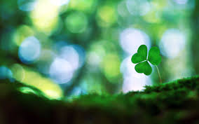 hd four leaf clover wallpapers download free 456732 4288x2848
