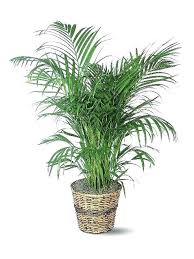 best indoor house plants great indoor plants best and easy indoor house plants great site for