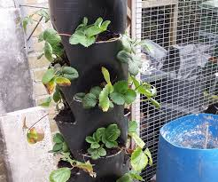 plant tower made out of pvc pipe 15 pockets 8 steps with pictures