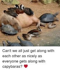 Can T We All Just Get Along Meme - can t we all just get along with each other as nicely as everyone