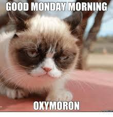 Monday Cat Meme - 25 best memes about i hate mondays cat i hate mondays cat memes