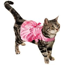 Aristocats Halloween Costumes 72 Cat Costumes Images Cats Animals