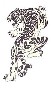 white tiger on back shoulder photo 1 photo pictures and