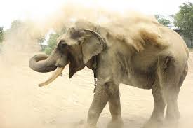 The Blind Men And The Elephant Analysis Indian Elephant Finally Free After Over 50 Years Chained Daily