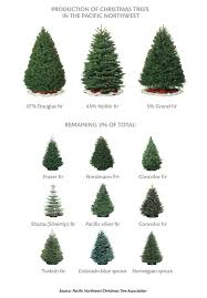 best 25 fraser fir christmas tree ideas on pinterest balsam