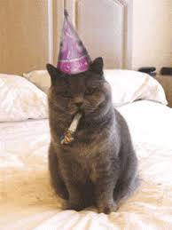 Cat Happy Birthday Meme - funny cat happy birthday animated gif speakgif