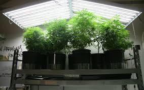 Best 25 Marijuana Grow Lights by Best T5 Grow Lights For Growing Cannabis U2013 2017 Reviews