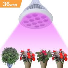 amazon com led plant grow light bulb iegeek 36w full spectrum