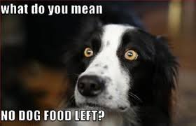 Border Collie Meme - 10 reasons why your border collie is staring at you right now