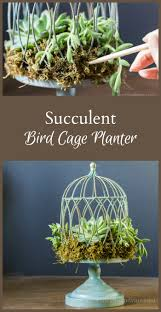 How To Make A Succulent Planter by How To Make A Succulent Birdcage Planter Birdcage Planter