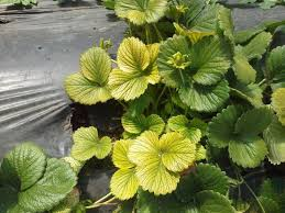 why are my plants turning yellow mnn mother nature network