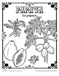 vegetables in spanish in spanish foreign languages and