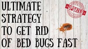 how to get rid of bed bugs yourself quick tips for killing bed