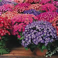 gardening by winter flowers for india sep march