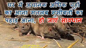 House Means Rats Coming In House Means Bar To Success घर म अच नक