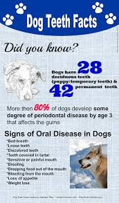 dog teeth cleaning products best devices for dog oral hygiene