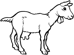 free coloring pages for kids to print free printable goat coloring pages for kids