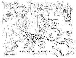 free coloring page of the rainforest rainforest coloring page amazon coloring page free download tropical