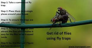 How To Get Rid Of Backyard Flies by How To Get Rid Of Flies Permanently In Natural U0026 Fast Ways Manvspest