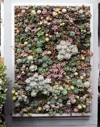 the 25 best vertical succulent gardens ideas on pinterest