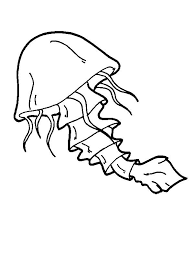 free coloring pages jellyfish jellyfish with a tail coloring page download print online