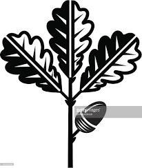 White Oak Leaf Oak Leaf And Acorn Vector Art Getty Images