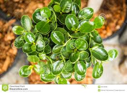 ornamental plants green stock photo image 52379058