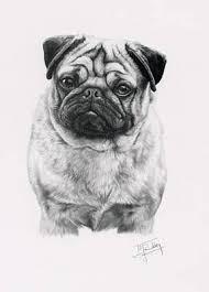 2111 best pug dog art images on pinterest pug dogs dog art and