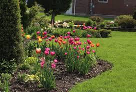 tulips sorta like suburbia