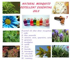 natural mosquito repellents oils to repel mosquitoes for indoor and outdoor applications