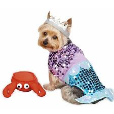 halloween costumes for the coastal pet coastal living