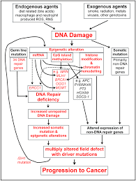 dna damage dna repair and cancer intechopen