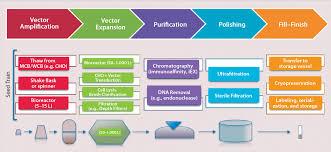 emerging platform bioprocesses for viral vectors and gene