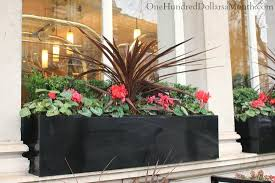 window box ideas for late winter and early spring one hundred