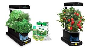 grow your own fresh herbs veggies and more with an indoor