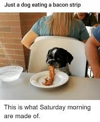 Eating Meme - top 29 eating meme meme animal and dog