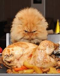 44 best thankgiving cats images on cats