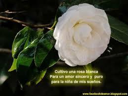 imagenes de amor con rosas animadas imagenes animadas rosas blancas 3 rosa blanca pinterest rosa
