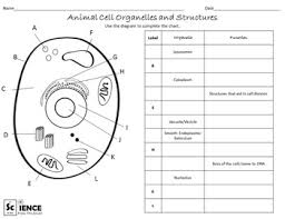 plant and animal cells worksheets for middle and high