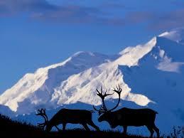 brilliant colors of denali national park alaska wallpapers 706 best all things alaska images on pinterest alaska usa