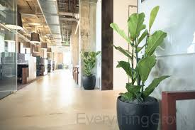 Office Plants by Modern Office Plants Home Design Ideas