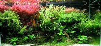 led reef lighting reviews 10 best led aquarium lighting for plants corals 2018 reviews
