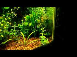 Aquarium Aquascaping Aquarium Aquascaping Mini Tank Youtube
